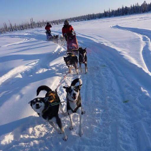 photo gallery husky tours, dog sledding pictures, husky trips, lapland