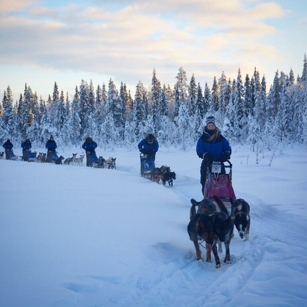 husky sled dog tours in kiruna, daily dog sledding, winter activities, winter lapland, lapland husky
