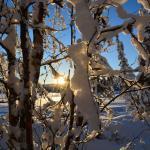 Husky tours daily husky sled dog trips, husky rides, winter activities lapland, sweden, kiruna