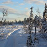 our trail sculpted dog sled trail husky tours lapland