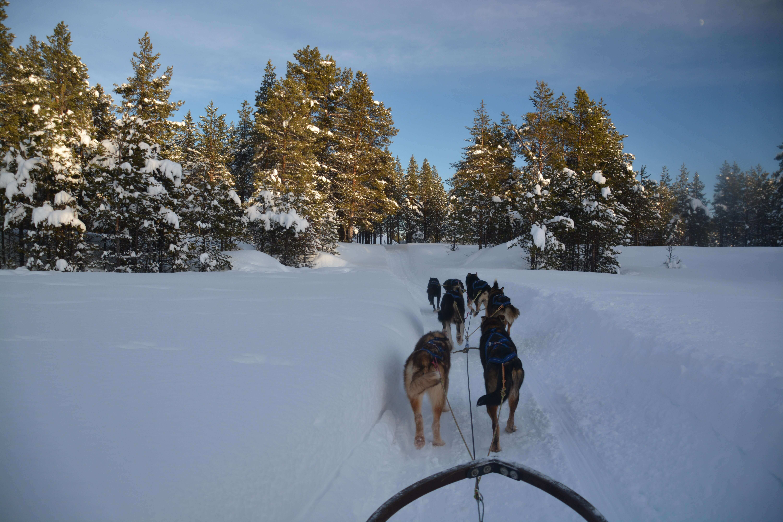Husky Tours in sweden