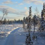 dog sled tours, sled dog trips, lapland holiday, sledding, huskies, alaskan husky