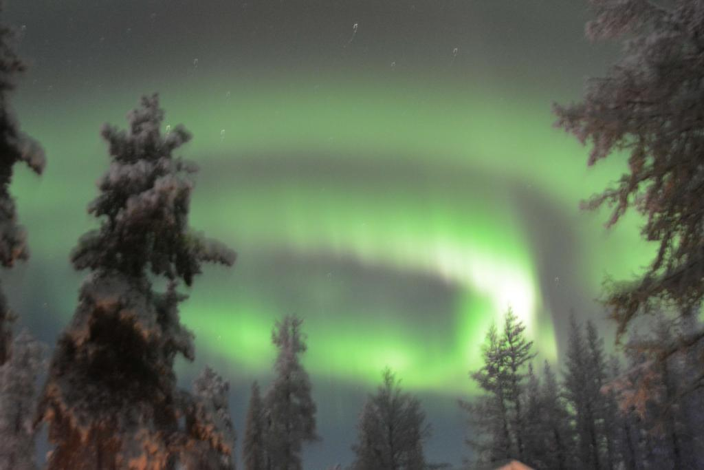 special offer Husky Tours northern lights dogsledding trip