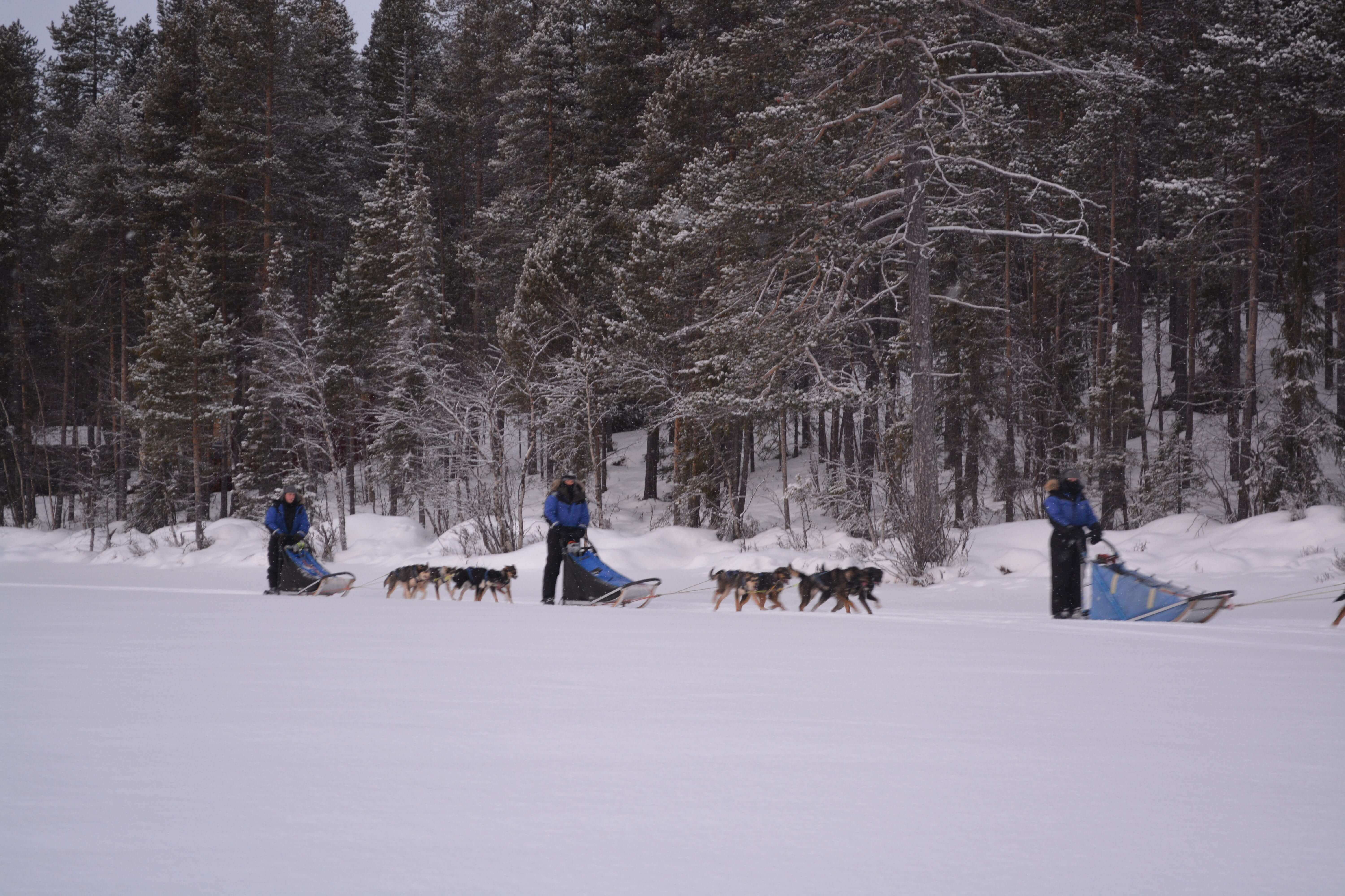 driving your sled dog team with husky tours