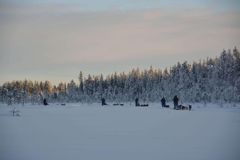 Dog sledding with husky tours lapland