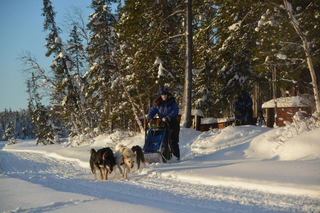 dog sled tour with husky tours lapland