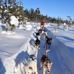 dogsledge tour husky tours lapland