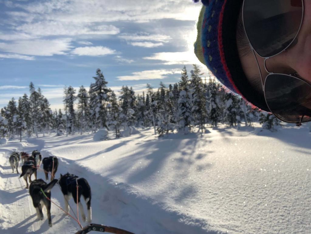 husky tours dog sledding kiruna sweden