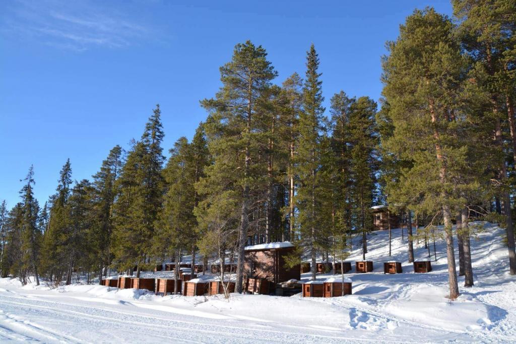 wilderness lodge husky tours