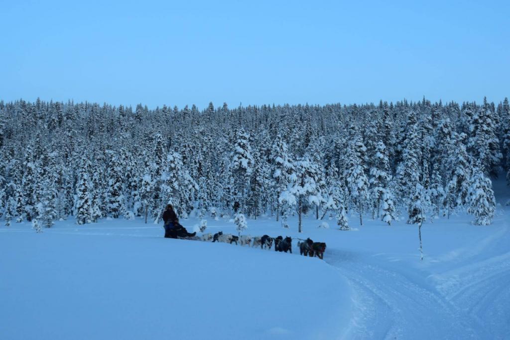 morning run wiht dogs