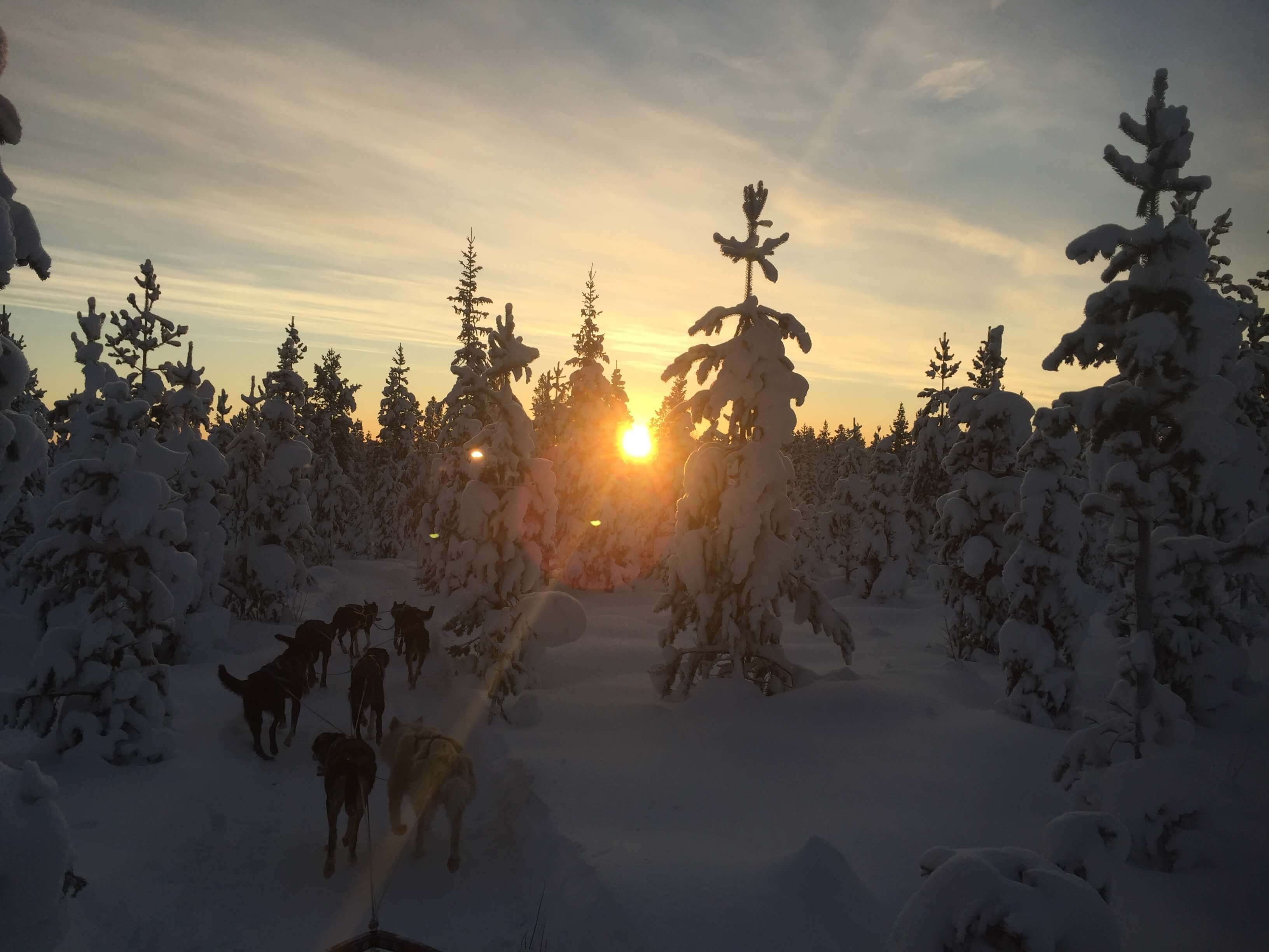 tailor made tours, husky tours lapland