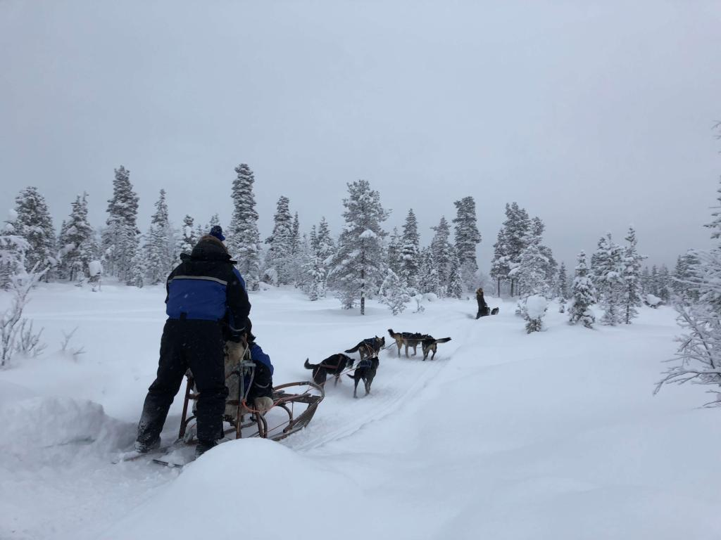 dog sledding trail