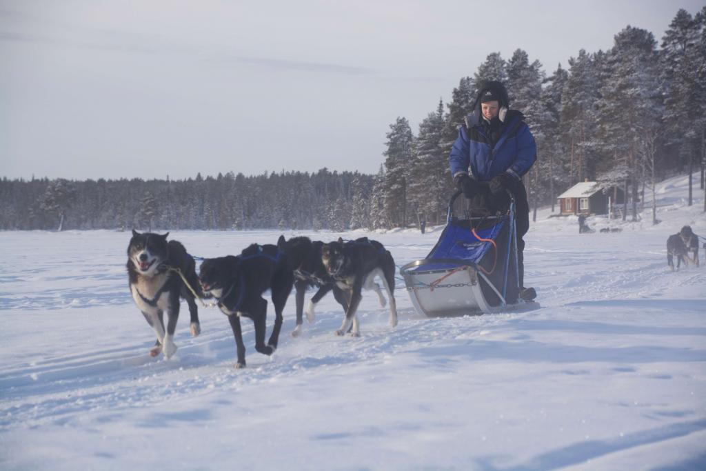 charity challenge dog sledding