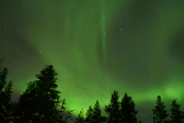 husky auroras