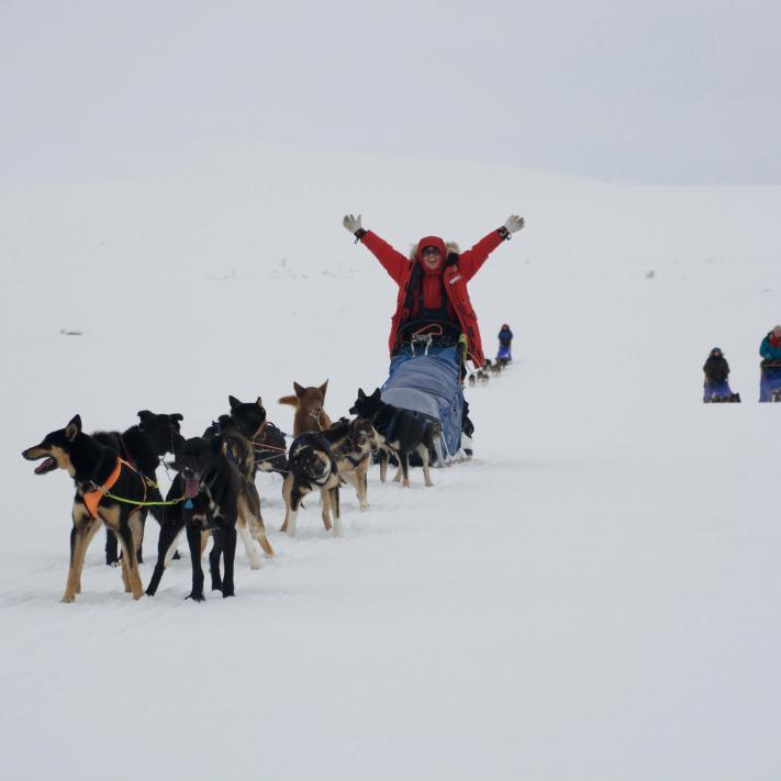 our special husky tours, husky tours lapland
