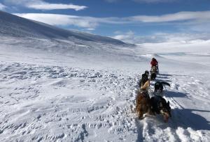 Husky tours mountain trip