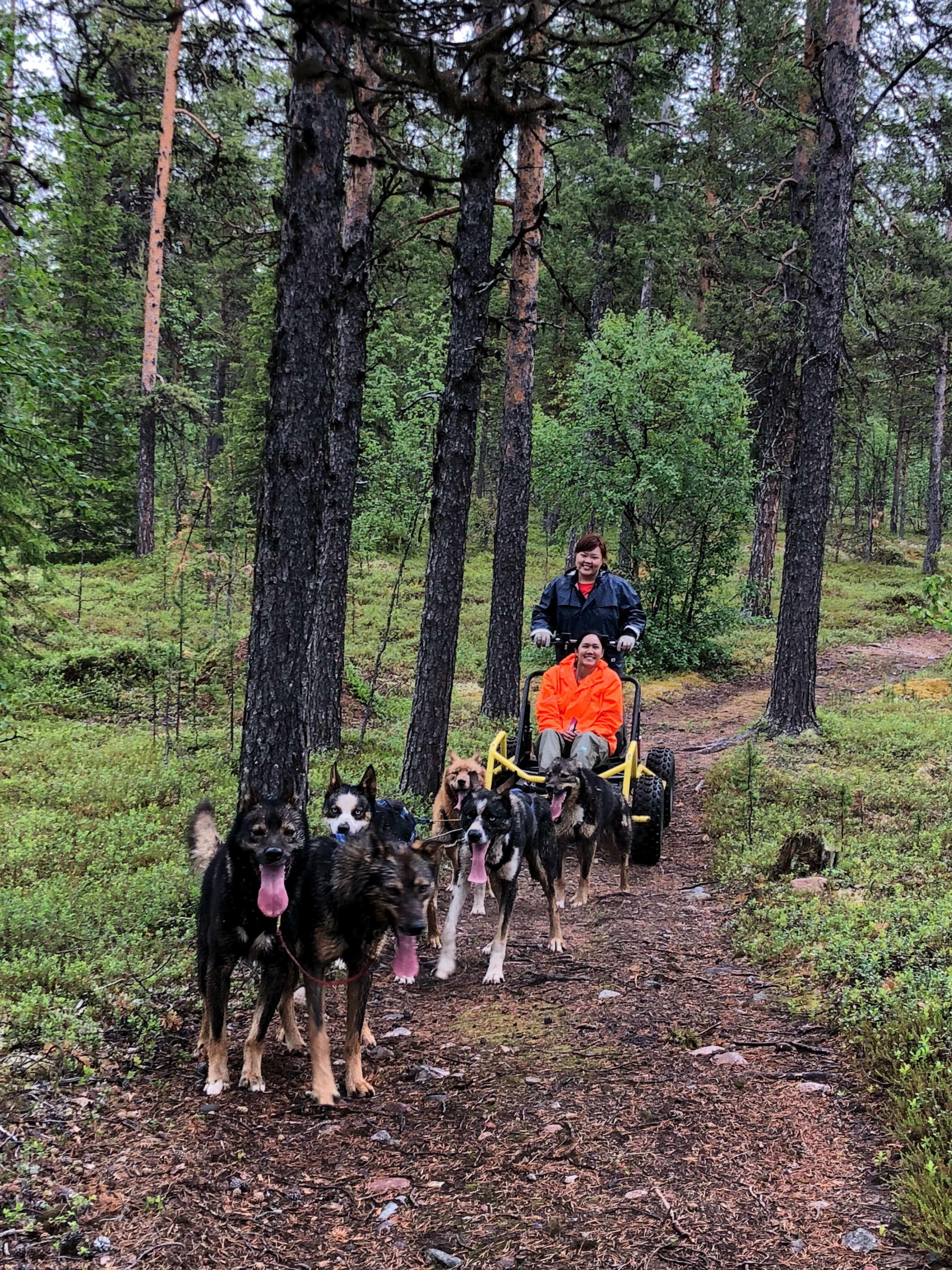 husky cart tour