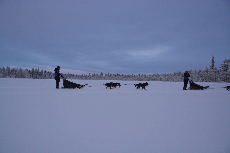 sled tours in kiruna