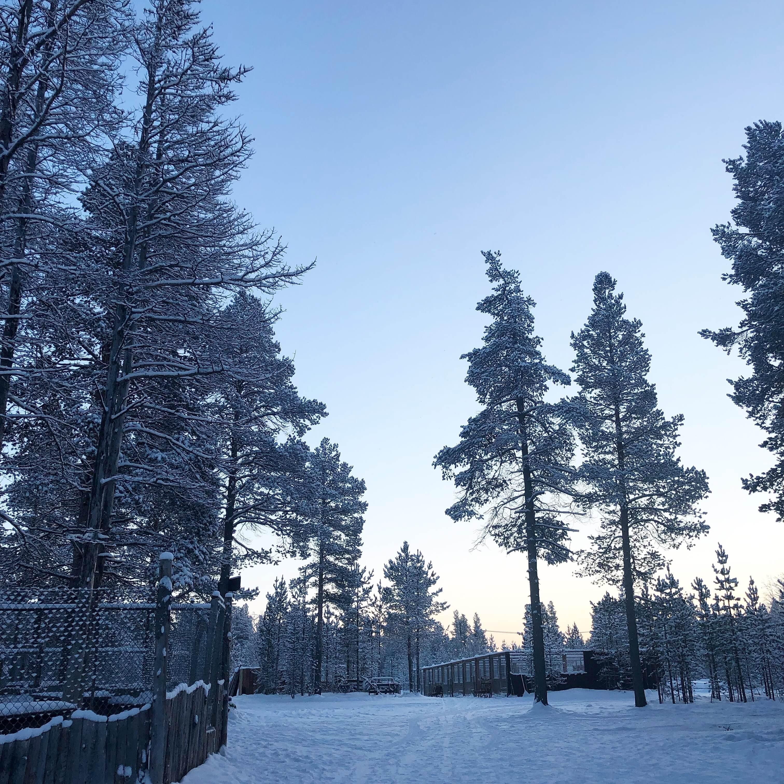 Husky Sledding Sweden